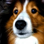 """""""Doggy Rights"""" - A Funny Story About a Dogs Perspective by Jessica Baatz"""